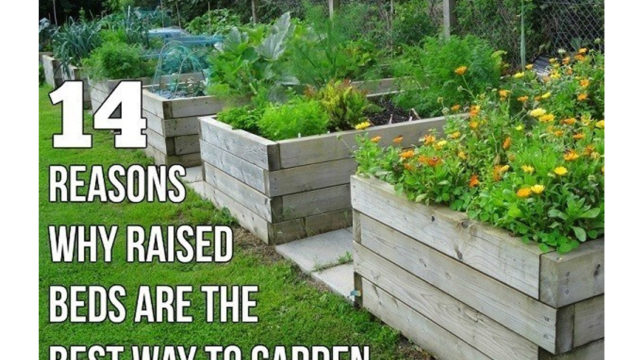 THE DIY RAISED BED N°2